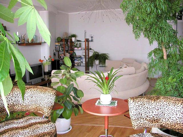 Цветы в квартире дизайн в