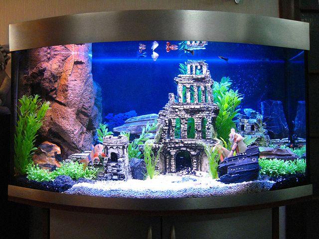 Необычное оформление аквариума