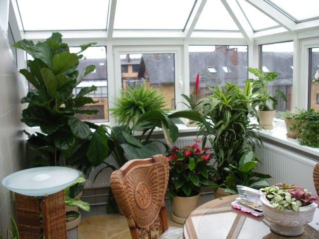 экзотические растения на лоджии